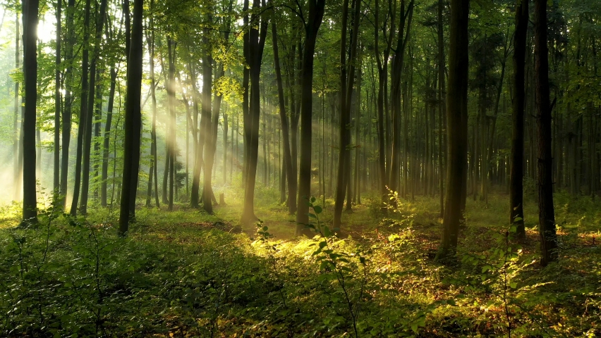 Beautiful sunlight in the forest aerial footage | Shutterstock HD Video #1060447954