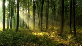 Beautiful sunlight in the forest aerial footage
