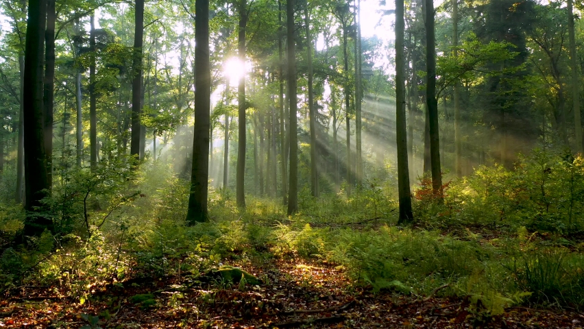 Beautiful sunlight in the forest Royalty-Free Stock Footage #1060516912