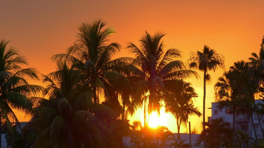 Miami beach sun down in palm tree sunset 4k florida usa