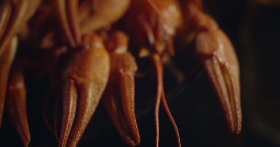 Close up macro view of lobsters and crawfish shot in beautiful lens on black background in slow motion | Shutterstock HD Video #1060609837