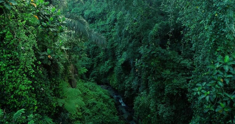 Aerial view river in tropical jungle green rainforest. 4K | Shutterstock HD Video #1060614139