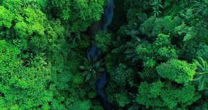 Aerial top down view river in tropical jungle green rainforest. 4K