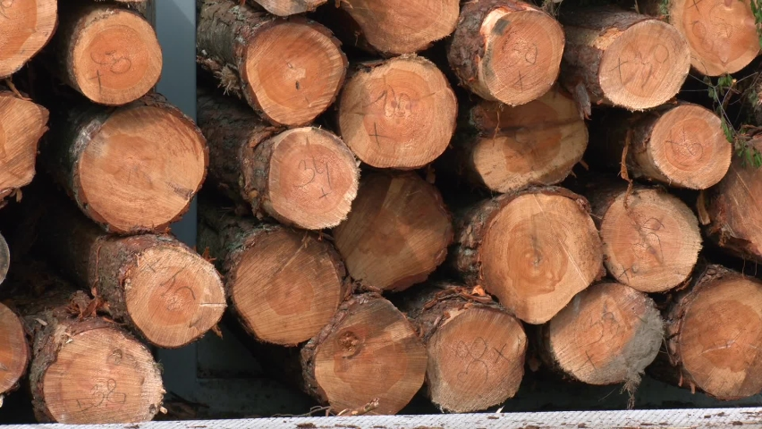 Round timber logs preparation sorting processing at sawmill. Log spruce trunks pile. Sawn trees from the forest. Logging timber wood industry. Cut trees along a road prepared for removal. | Shutterstock HD Video #1060779508