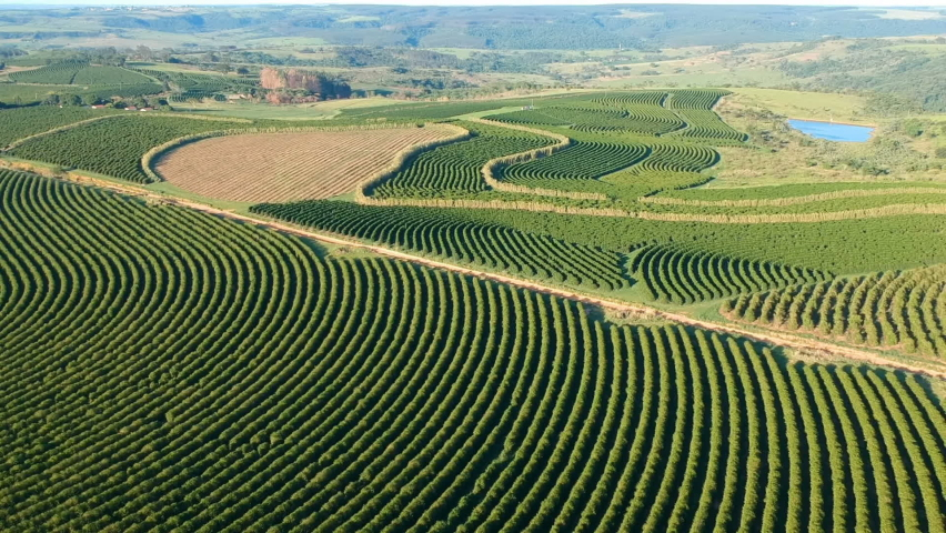 Aerial view of green coffee field in Brazil