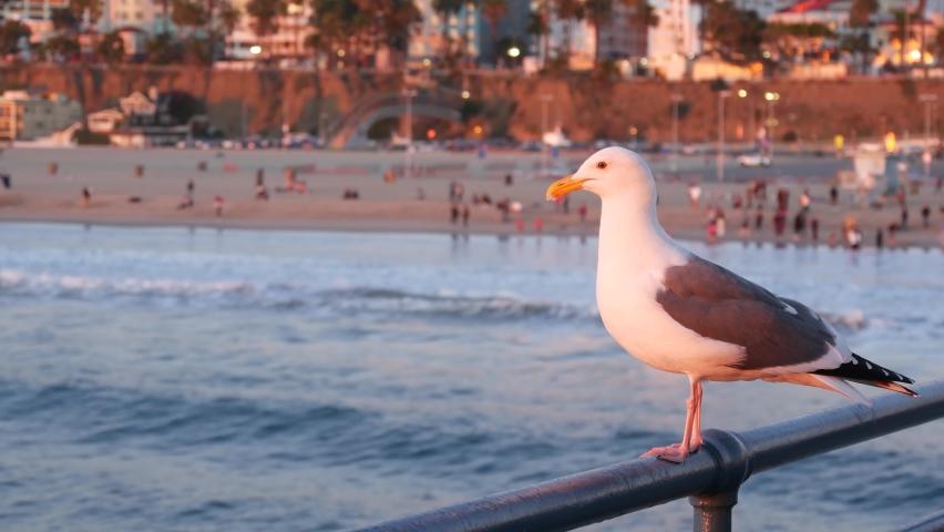 California summertime beach aesthetic, pink sunset. Cute funny sea gull on pier railing. Ocean waves, defocused people and beachfront weekend houses. Purple sundown, Santa Monica Los Angeles CA USA. | Shutterstock HD Video #1060844521