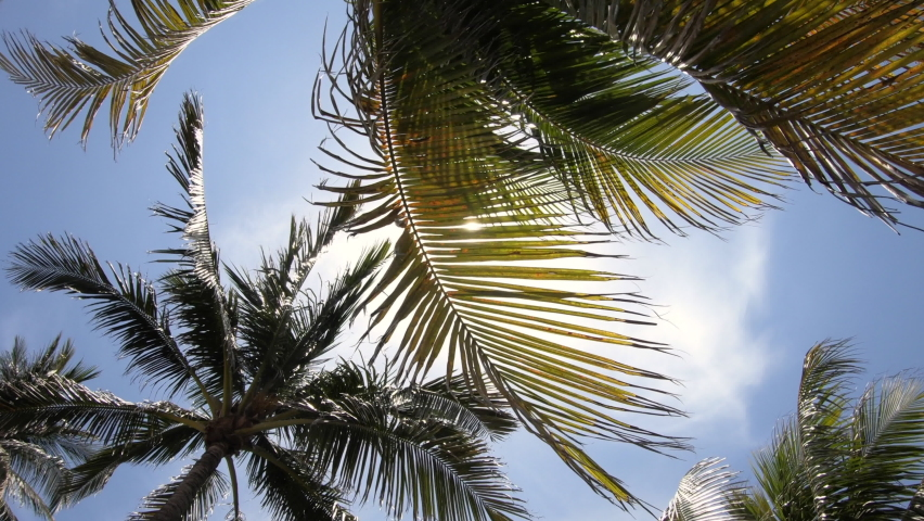Palm trees and sun light in the south beach neighborhood of miami beach florida usa american summer landscape with palms and clear sky | Shutterstock HD Video #1060848739