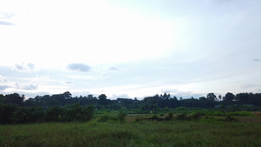 Evening 4K time-lapse of sunset. Big clouds floating on blue sky over a paddy field and palm trees. Bali nature, Indonesia. Panning left. Day to night time-lapse. Getting dark.