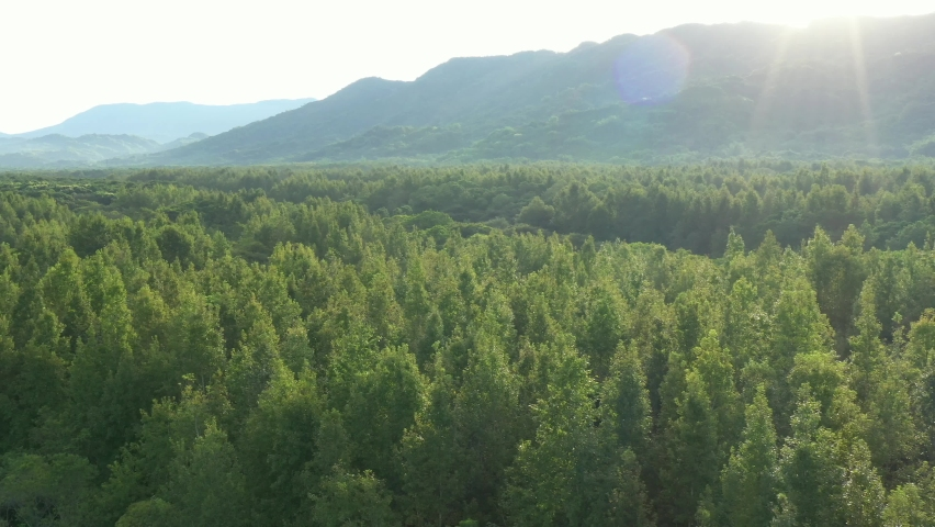 Beautiful sunrise landscape aerial view in vast forest - Birds eye view use the drone in morning bright sunlight. Shot in Danongdafu Forest Park, Hualien, Taiwan. Royalty-Free Stock Footage #1060889584