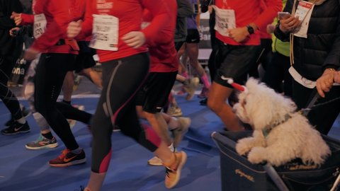 BARCELONA, SPAIN, 31 DECEMBER 2019: New year running marathon, crowd of people run in costumes, christmas happy people legs, family and friends sport