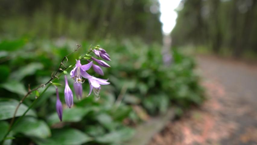 Beautiful purple flower in a big city park | Shutterstock HD Video #1060909666