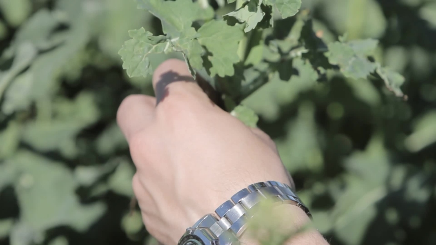 The agronomic analysis of the soil in which a young crop grows in the field. An agronomist diagnoses young plants in the field. | Shutterstock HD Video #1060921666