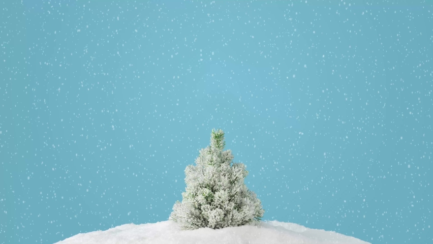 4K Video. 2021 Creative layout with snowy Christmas tree on bright blue background. Minimal winter nature holiday scene. | Shutterstock HD Video #1060990984