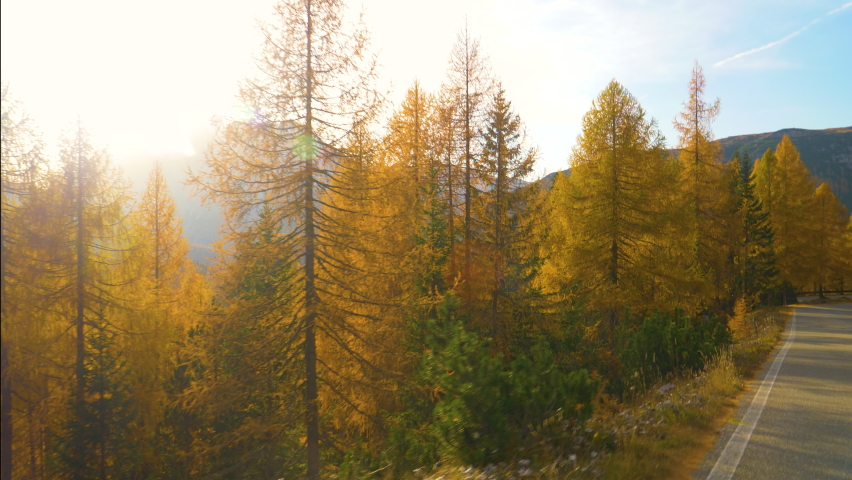 SLOW MOTION, LENS FLARE: Warm autumn evening sunbeams shine on the colorful forests in Tre Cime. Cinematic shot of larch trees turning their leaves near a scenic road in the picturesque Italian Alps. | Shutterstock HD Video #1061012911