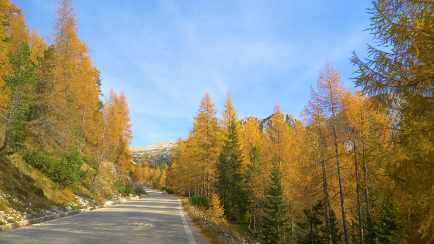 SLOW MOTION: Beautiful larches growing next to a scenic road near Tre Cime turning their leaves in fall. Cinematic view of larch tree forest near a scenic mountain road in the breathtaking Dolomites. | Shutterstock HD Video #1061012914