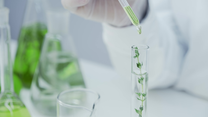 Close-up of flask with green stem in laboratory. The green reagent is pipetted into the test tube with the plant. Laboratory research of medicinal properties of herbs. Natural cosmetics production.