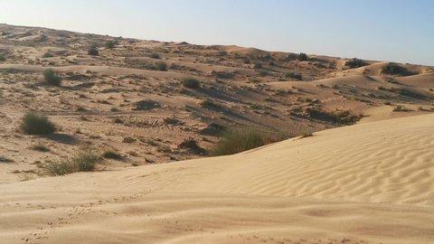 Arabian peninsula desert sand, sand dune, desert plant view 4k