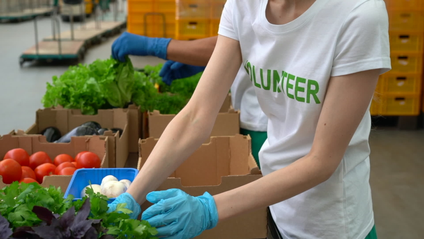 Woman and man in volunteer t-shirt packing vegetables for donation charity for poor Spbas. Food parcels from factory. Delivery meals to seniors in need. social service