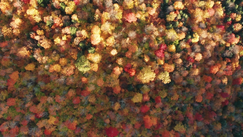 Aerial flythrough of Mountain Forests in Autumn with Fall Colors in Adirondacks, New York, New England | Shutterstock HD Video #1061148871