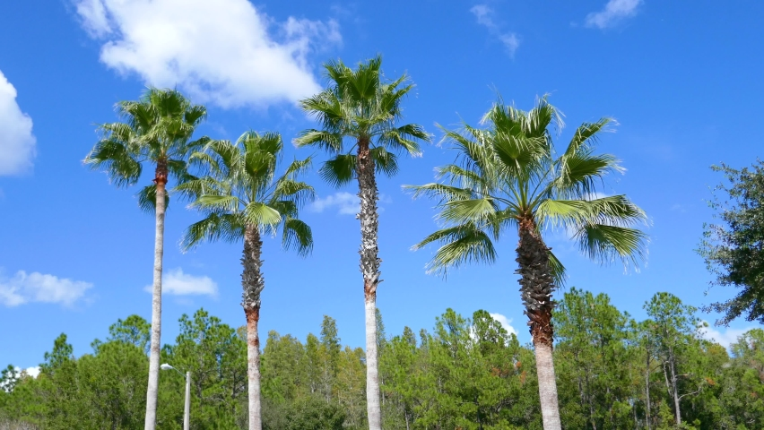 Beautiful palm tree in wind in autumn of Florida | Shutterstock HD Video #1061170549