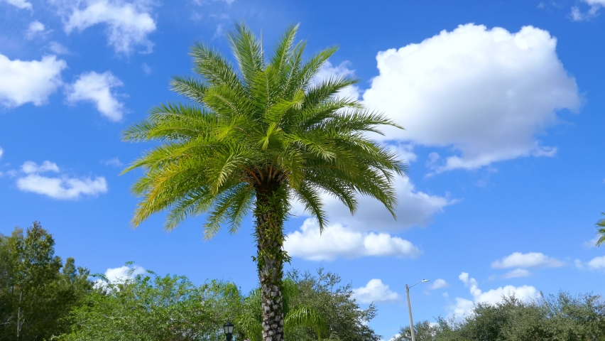 Beautiful palm tree in wind in autumn of Florida | Shutterstock HD Video #1061170552