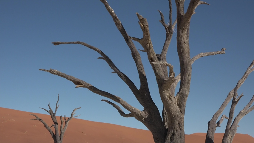 Namibia. Sossusvlei. Namib Desert on sunny early morning in Namib-Naulkuft Park in Namibia, southern Africa. | Shutterstock HD Video #1061177548