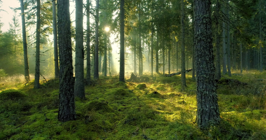 Magical misty forest in early foggy summer morning at sunrise dolly shot | Shutterstock HD Video #1061184244