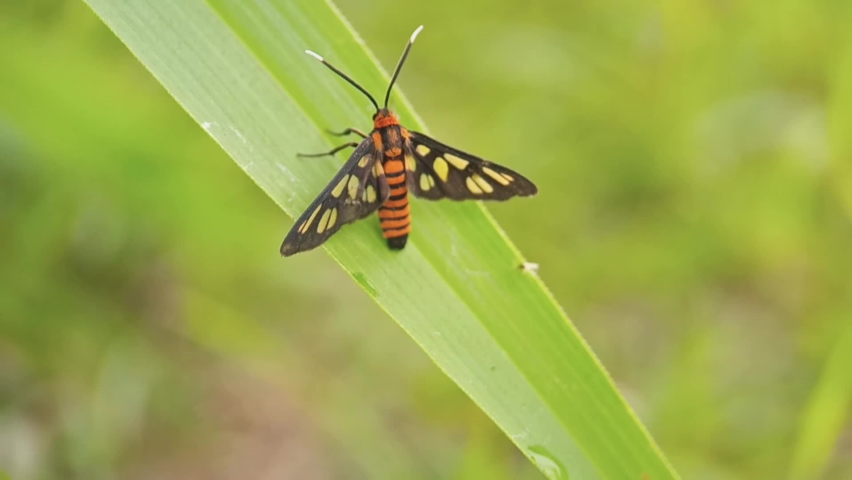 Orange insect on the leaf | Shutterstock HD Video #1061190760