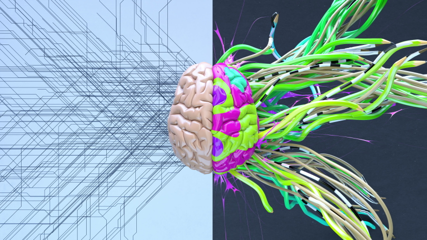Creative left brain functions and right analytic hemisphere. 3d art color animation background Royalty-Free Stock Footage #1061230555