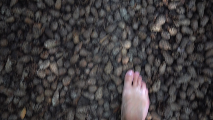 Barefeet man walking on brown, dry fallen pine or fir cones on healthy sensory path. Natural massage on special trail. Walk on natural material surface. Camera movement pov shot with gimbal.