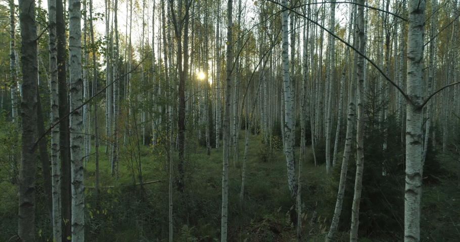 Sun shining between birch trees in forest at sunset dolly shot backwards Royalty-Free Stock Footage #1061260852