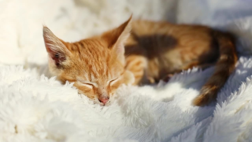 Little cute ginger kitten on fluffy white blanket in the rays of sunlight. Hygge and cozy morning concept | Shutterstock HD Video #1061319211