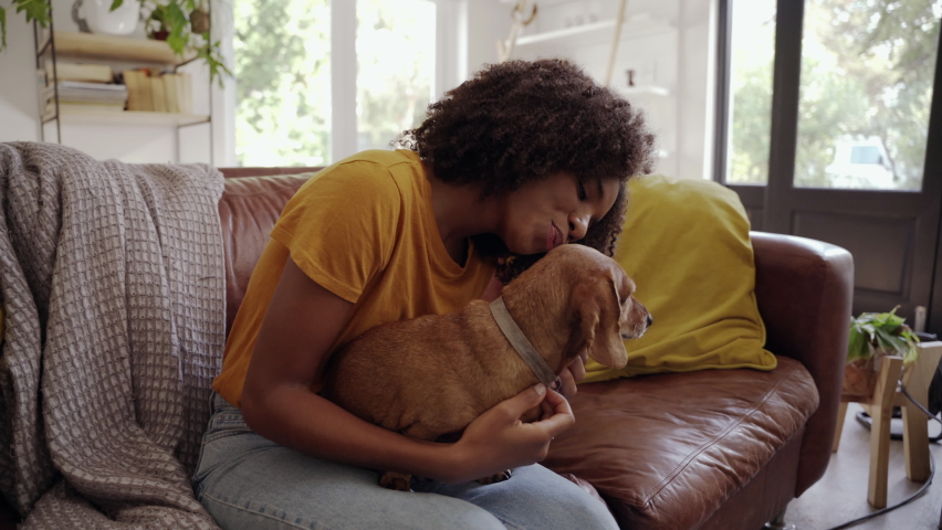 Happy young adult girl sitting on cozy sofa enjoying playing with small cute pet dog in apartment Royalty-Free Stock Footage #1061320642