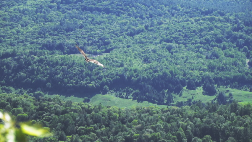 Golden Eagle with Brown Plumage Flying above Rugged and Mountainous Surroundings