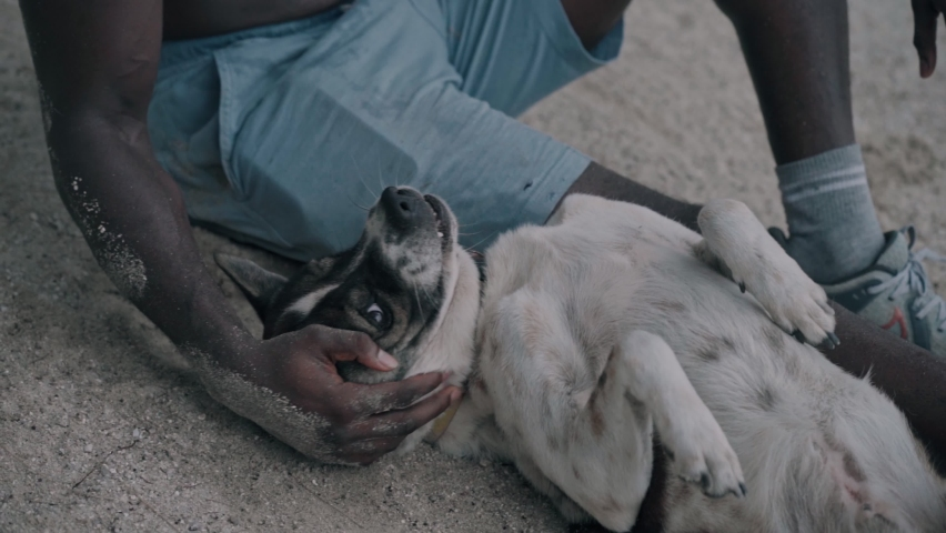 Young african american man playing with dog on the beach in slow motion   Shutterstock HD Video #1061366842