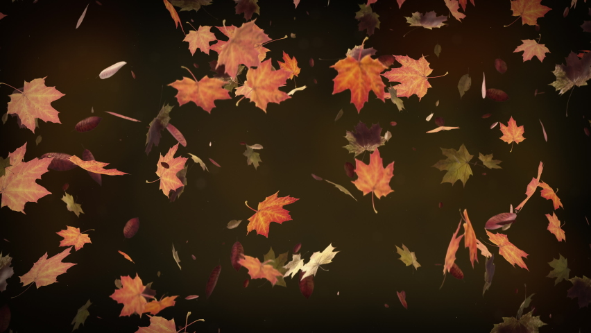 Autumn leaves falling slowly on defocused background. Fall season background seamless looping. Autumnal background. 4k | Shutterstock HD Video #1061395897