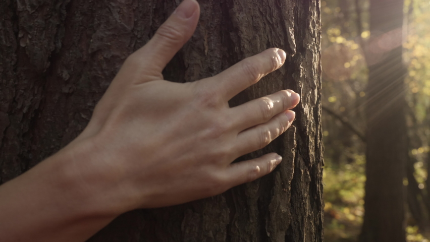 Female Hand Touching and Stroking Bark of Pine Tree in Forest. Hand Touching Old Majestic Oak Tree. Loving Nature. Harmony Calm Relaxation. Save Earth Green Planet . Royalty-Free Stock Footage #1061448052
