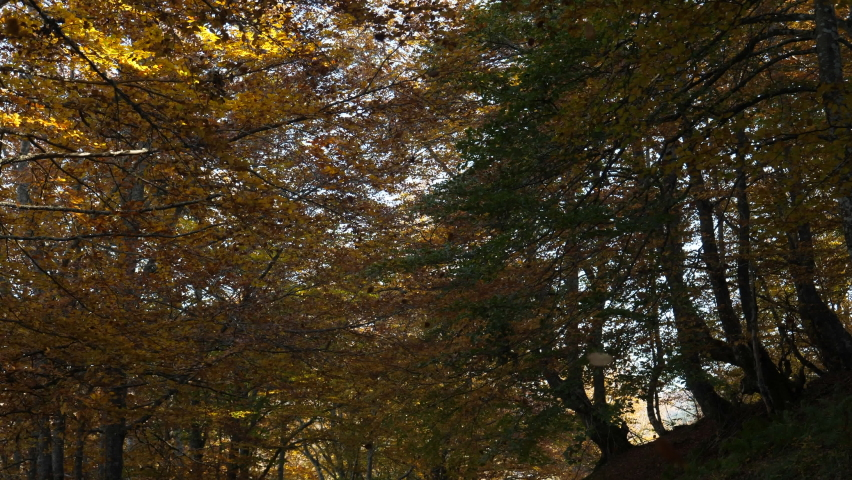 The wind shakes the trees and hundreds of leaves fall in a forest during autumn in slow motion | Shutterstock HD Video #1061469646