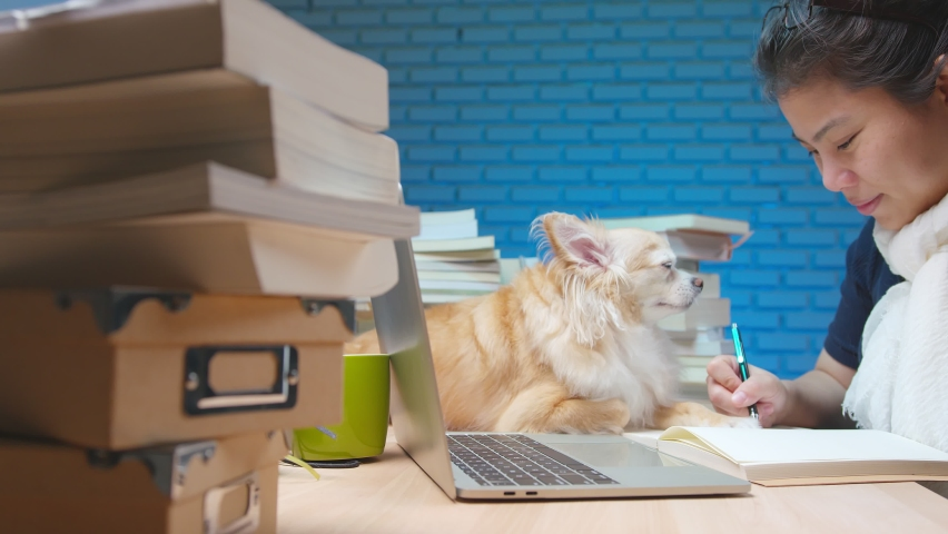 Young attractive asian female hand use laptop woking late night with little lap dog buddy sit relax on working table desk together with cheerful and happiness