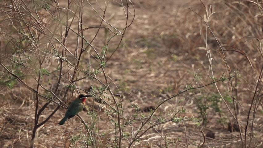 Bee-eater flying out of the branch in super slow motion | Shutterstock HD Video #1061495821