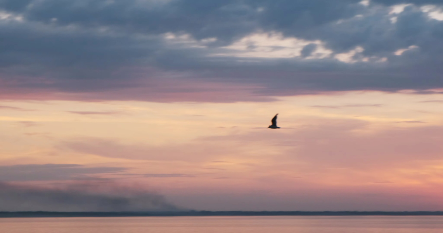 Camera following a flying bird, the gull in a beautiful sunset, vibrant sunrise in front of river, ocean, sea, lake with sky and clouds, water reflections of light in slow motion video nature footage | Shutterstock HD Video #1061551513