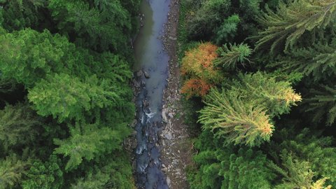 Mountain river and autumn, coniferous deciduous forest, top view.