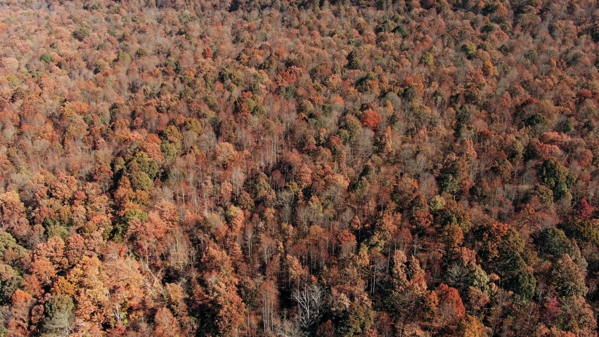 Beautiful autumn landscape with red oaks in the autumn oak forest. autumn leaves falling - autumn landscape yellow colorful forest trees autumnlandscape (autumnleaves background). Aerial Top View