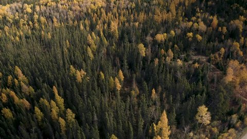 A slow aerial over a late autumn boreal forest in the Canadian shield. Whiteshell provincial park. Dead trees and brush scattered among the foliage.