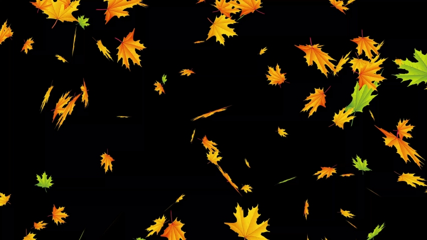 Beautiful autumn landscape with red oaks in the autumn oak forest. autumn leaves falling - autumn landscape yellow colorful forest trees autumnleaves animation