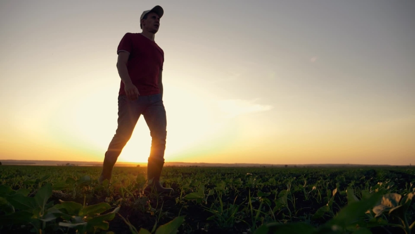 Agriculture. farmer agronomist walks through the green field of eco-crops in rubber boots. Legs in rubber boots. farmer agronomist hiking in green field Farm harvest of eco-crops. agriculture concept Royalty-Free Stock Footage #1061639809
