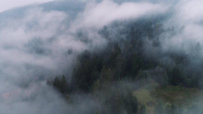 Rainy weather in mountains. Misty fog blowing over pine tree forest. Aerial footage of spruce forest trees on the mountain hills at misty day. Morning fog at beautiful autumn forest.  | Shutterstock HD Video #1061662531