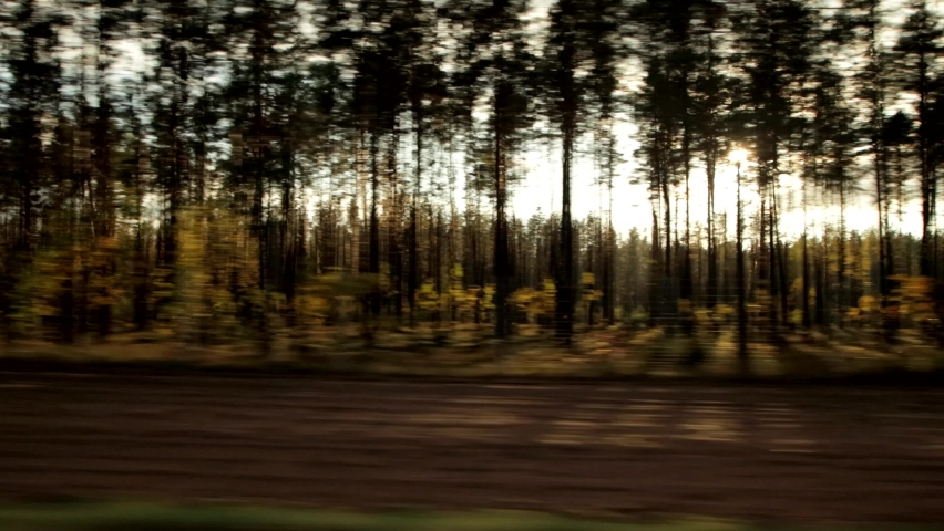 Sunlight shines through the trees, beautiful nature. Car window view, background, landscape, copy space   Shutterstock HD Video #1061757100
