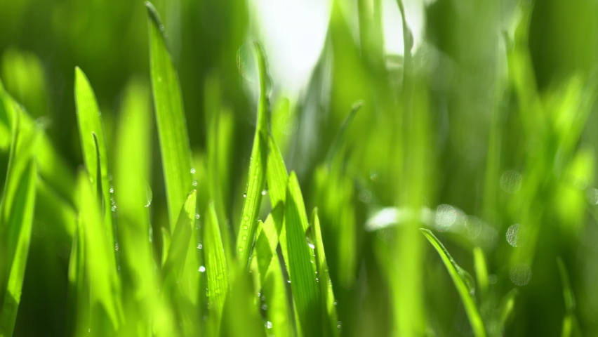 Fresh green grass with dew drops clips, dew drops on green grass footage, rain drops on green grass video. Сloseup rotation Royalty-Free Stock Footage #1062113017