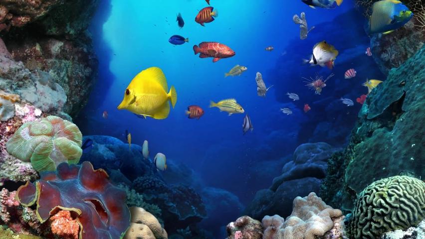 Colorful tropical coral reef aquarium fish crab underwater scene 4K aerial view footage | Shutterstock HD Video #1062184825